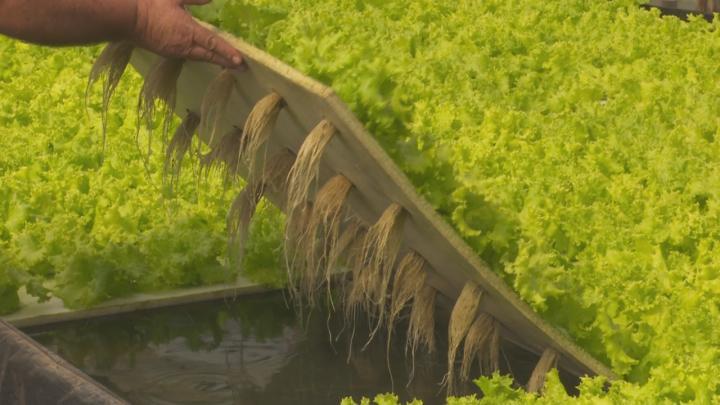 El gobierno bonaerense impulsa con cooperativas distintos proyectos de bioenergía