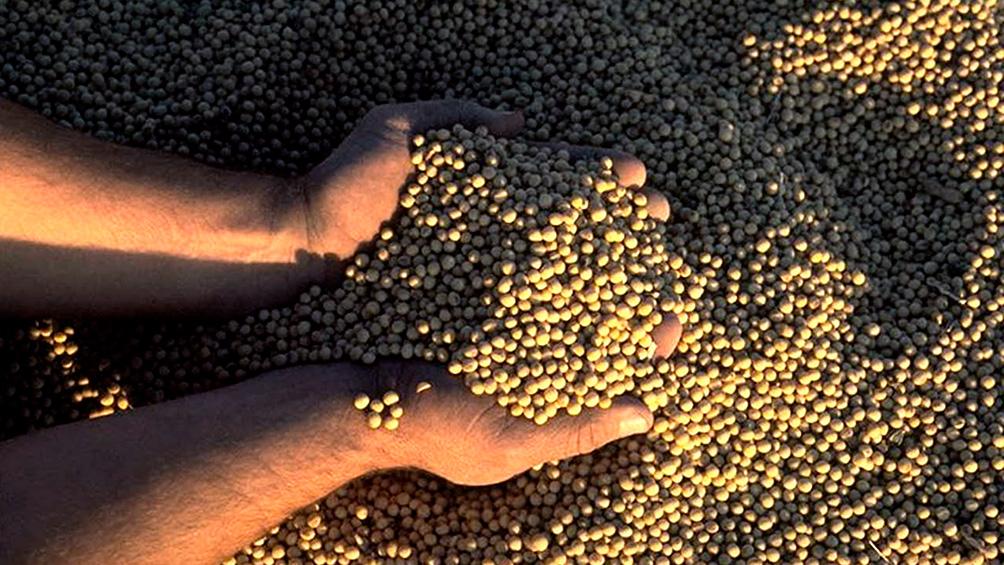 Los exportadores de aceites y granos liquidaron U$S 2.266 millones en agosto