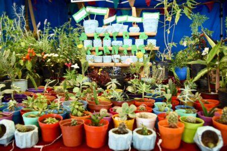 trelew:-segunda-edicion-de-expo-plantas