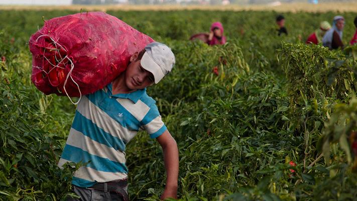 la-pandemia-favorecio-el-aumento-del-trabajo-infantil