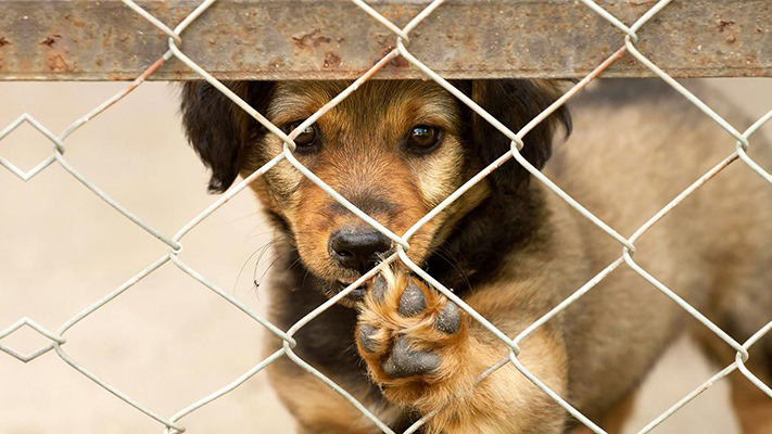 por-la-pandemia,-aumento-la-adopcion-de-mascotas