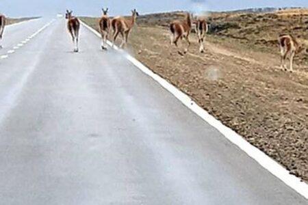 una-familia-que-viajaba-desde-formosa-a-santa-cruz-choco-contra-un-guanaco-a-20-kilometros-de-trelew
