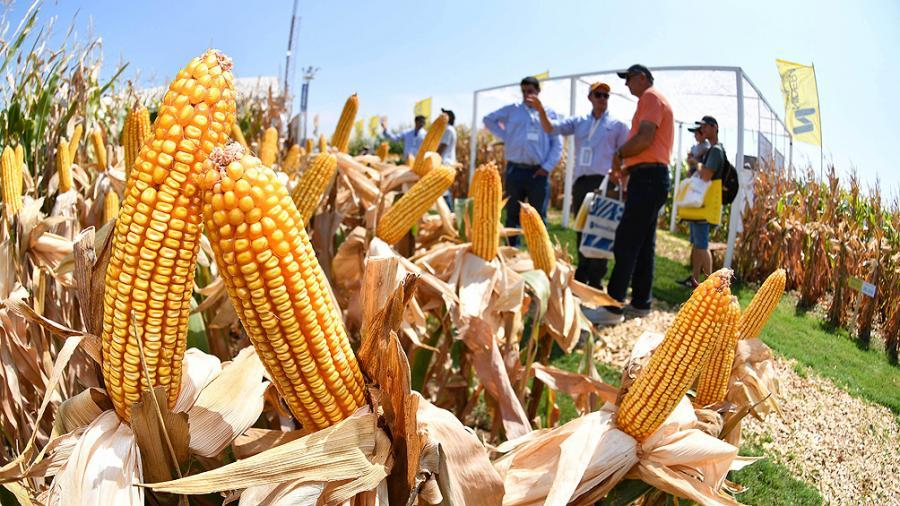 la-cosecha-de-maiz-finalizo-la-campana-20/21-con-produccion-de-50,5-millones-de-toneladas