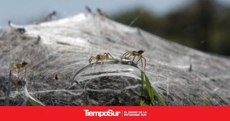 el-misterio-de-las-telaranas-gigantes-en-argentina-y-uruguay-resuelto