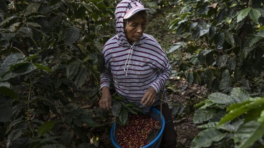 el-cambio-climatico-podria-reducir-la-produccion-de-azucar-y-cafe-en-50%-para-2099