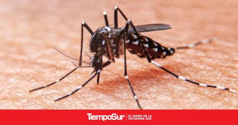 desarrollaron-un-antiviral-que-podria-tratar-y-prevenir-el-dengue